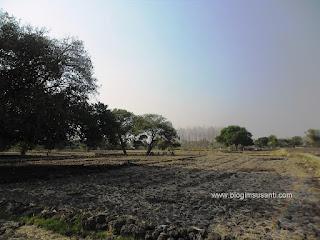 Area sawah di Lopang saat musim kemarau