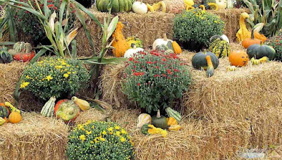 How to Harvest Gourds Correctly