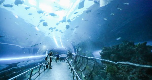 屏東車城|國立海洋生物博物館|三大水域展館|81米海底隧道|可愛企鵝白鯨|奇妙海底世界