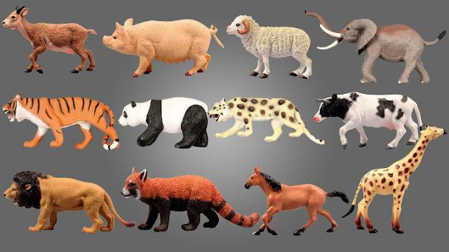 hayvanlar-testi-.jpg