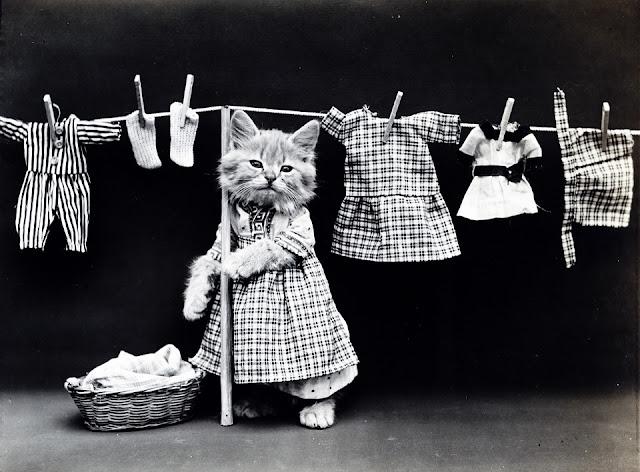 La gatta lavanderina che lava i fazzoletti...