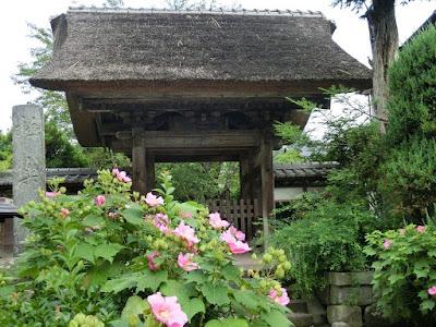 極楽寺のフヨウ