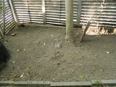 By Paul Jung Gardening Services--a Toronto Gardening Company Leslieville Garden Cleanup After