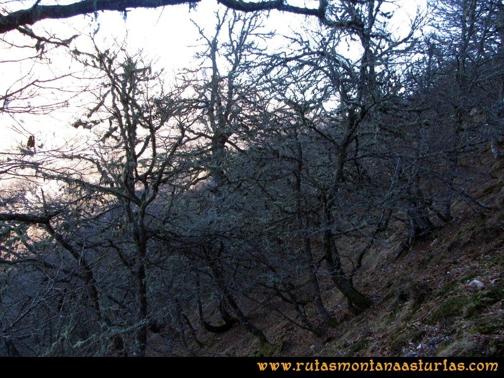Pico Mosquito desde Tarna: Bosque hacia collado Paréu