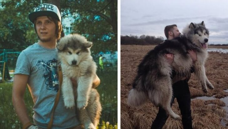 20 Cute Then And Now Pictures Of Puppies Growing Up