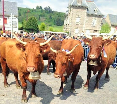 la laiterie de paris, montée en estive, vache salers, cantal, salers tradition, gaec salat, fromage, transhumance cantal, fête de l'estive allanche, blog fromage, blog fromage maison, cloche vache, faire du fromage, fabrication cantal, fabrication salers