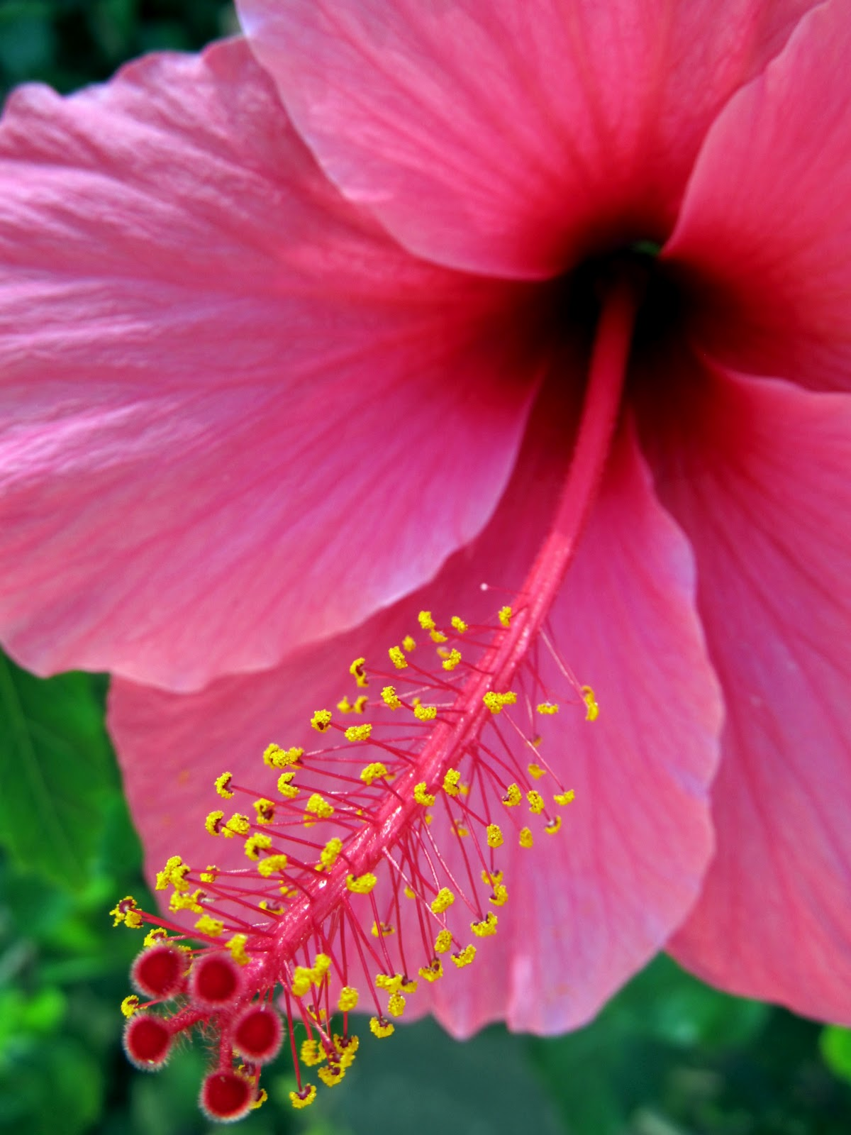 Hawaiian Plants And Flowers: Life With Dylan: Happy World Photography Day