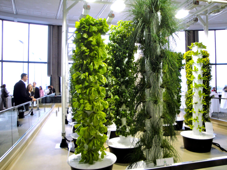 Blue Cheese Nation: Aeroponic Systems, No Dirt, Just Mist
