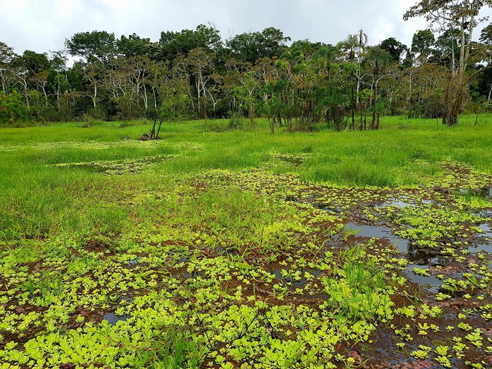 Chàng trai Việt phượt 1 mình vòng quanh thế giới đã tới rừng Amazon