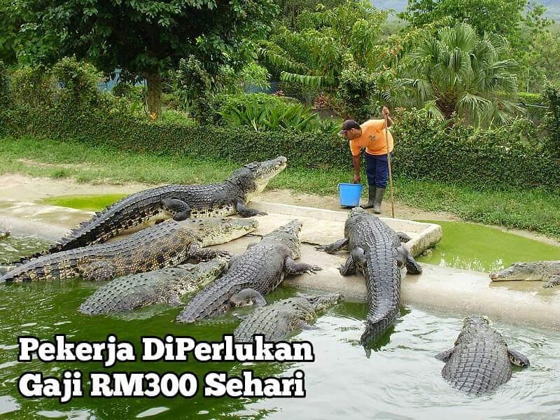 Kerja Kosong Gaji RM300 Sehari