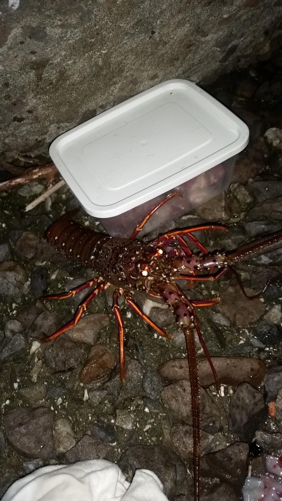魚殿堂-釣魚地圖: Lobster go home 誰又在亂放生了 這次是放龍蝦好扯喔!!