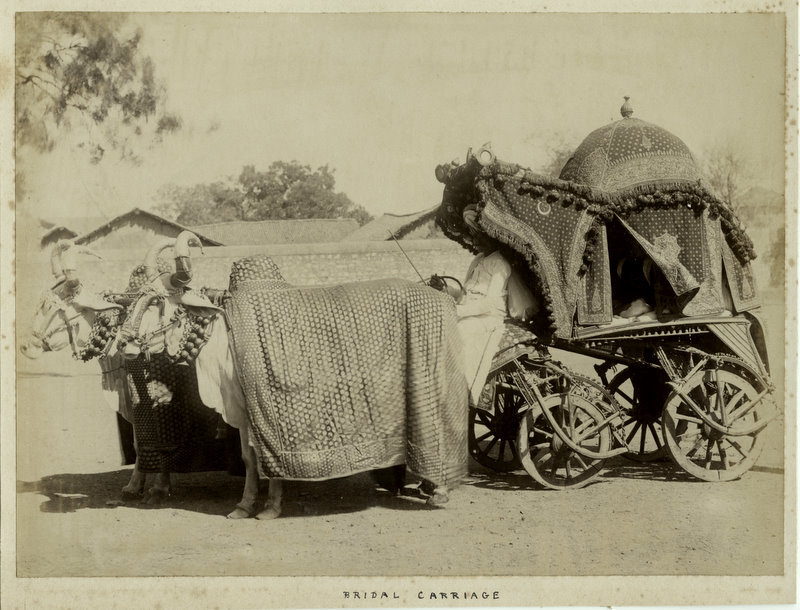 Well Decorated Bridal Ox Carriage - 1860's - Old Indian Photos