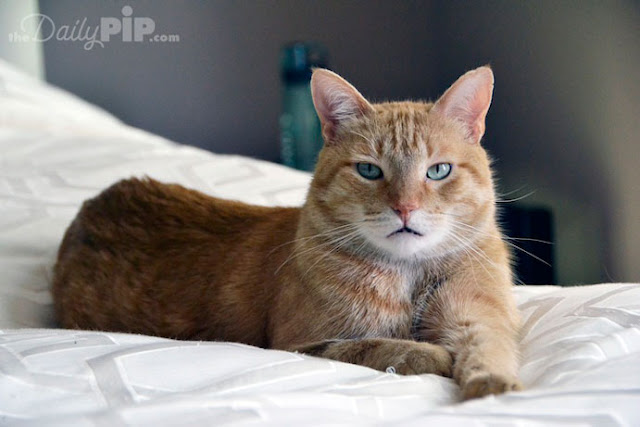 Jasper was rescued from a house of horrors but was given a second chance and a wonderful new adoptive home