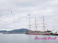 海鳥海獅群聚的漁人碼頭