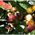 कुदरत का करिश्मा: इस पेड़ पर उगते हैं 40 तरह के फल...