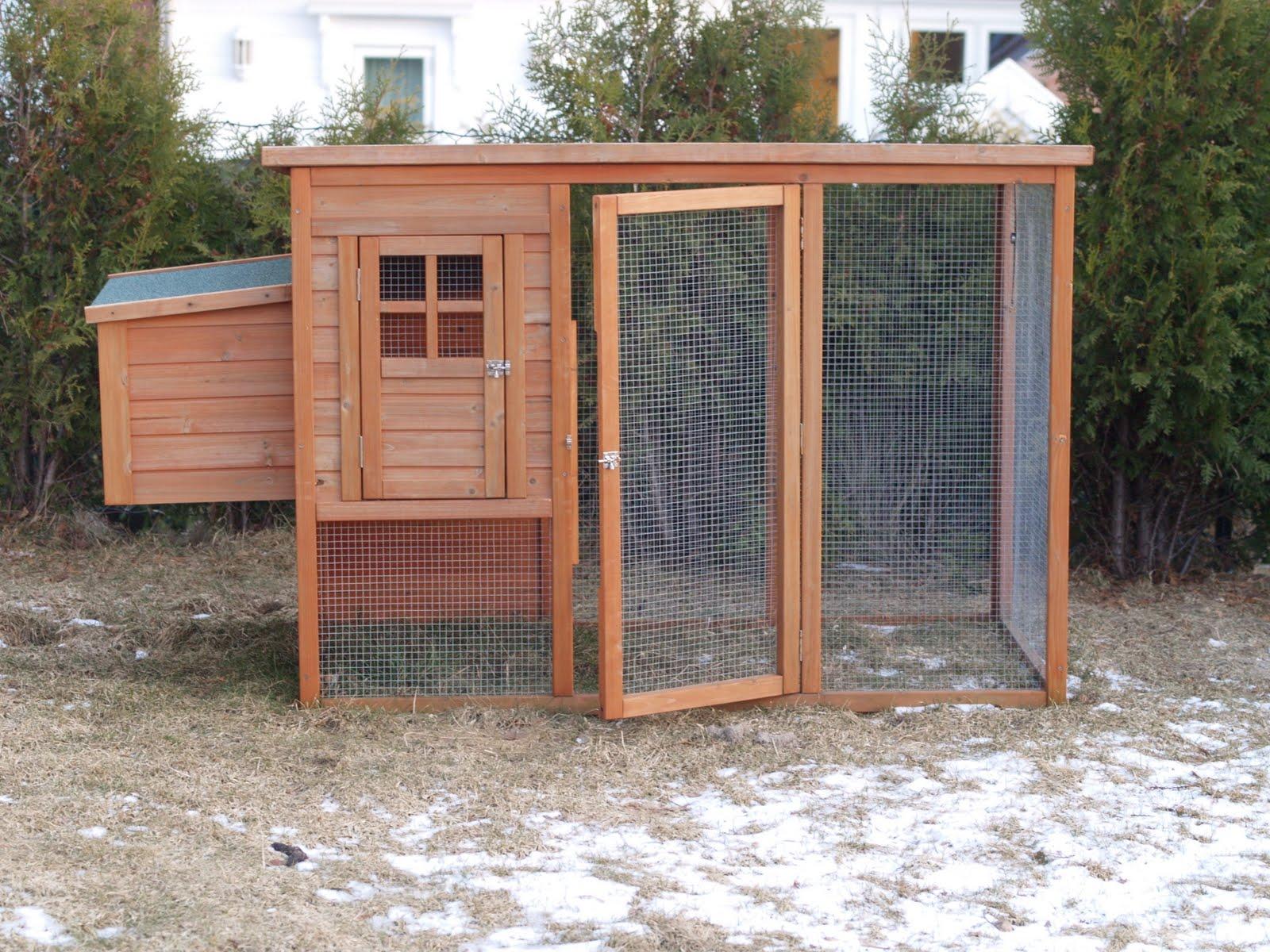 høner i hagen