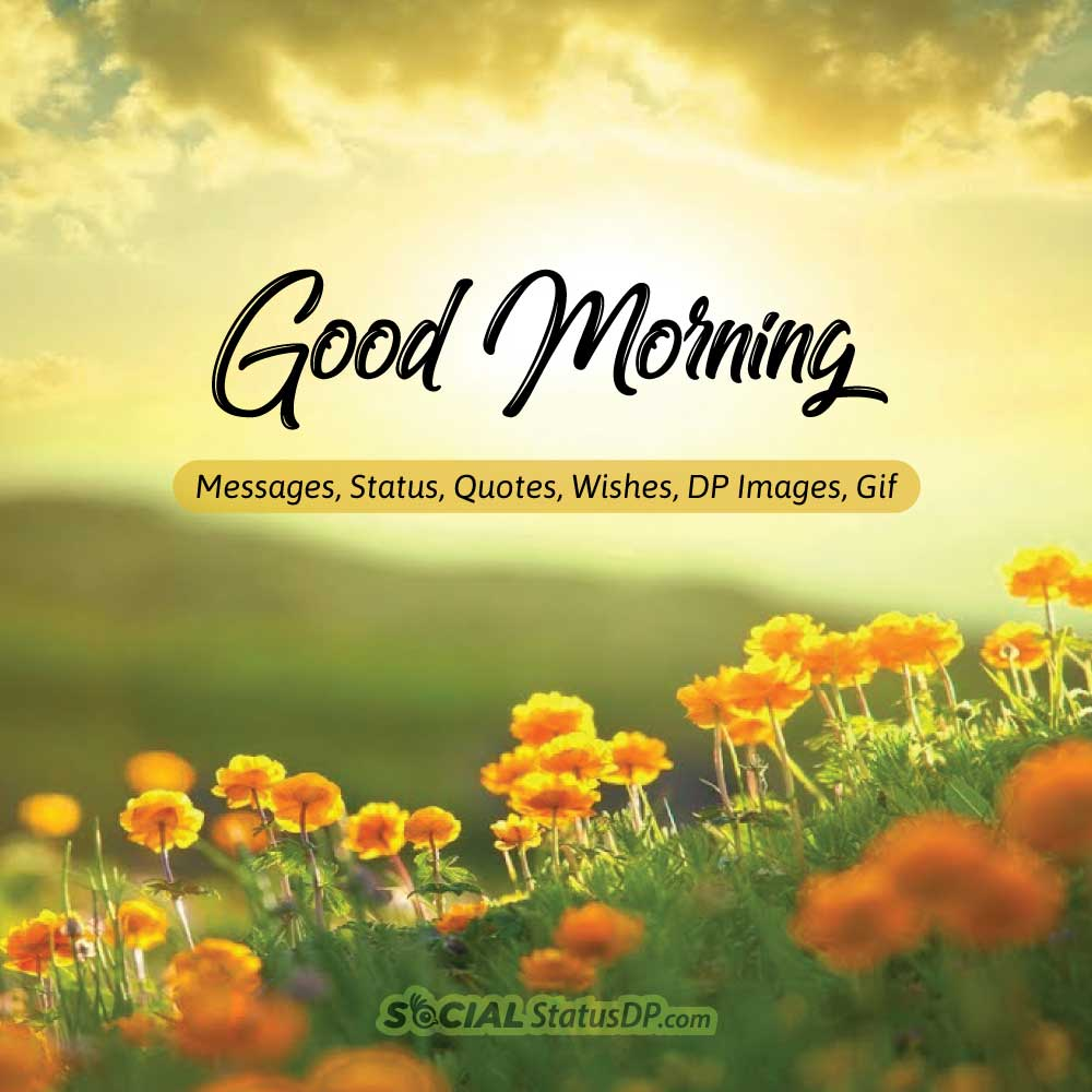 Good Morning Status Image: 100+ Best 🌻🌞 GOOD MORNING 🌞🌻 Messages, Status, Quotes