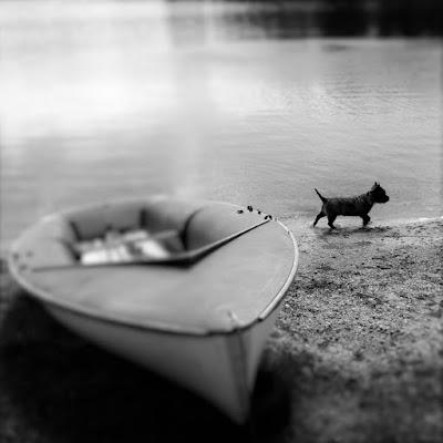 Spring, springtime, Eric le chien, Lac de Vassiviere, France, blossom, Limousin, de tout coeur limousin, forests, trees, Auphelle, haute vienne, Creuse, boats,