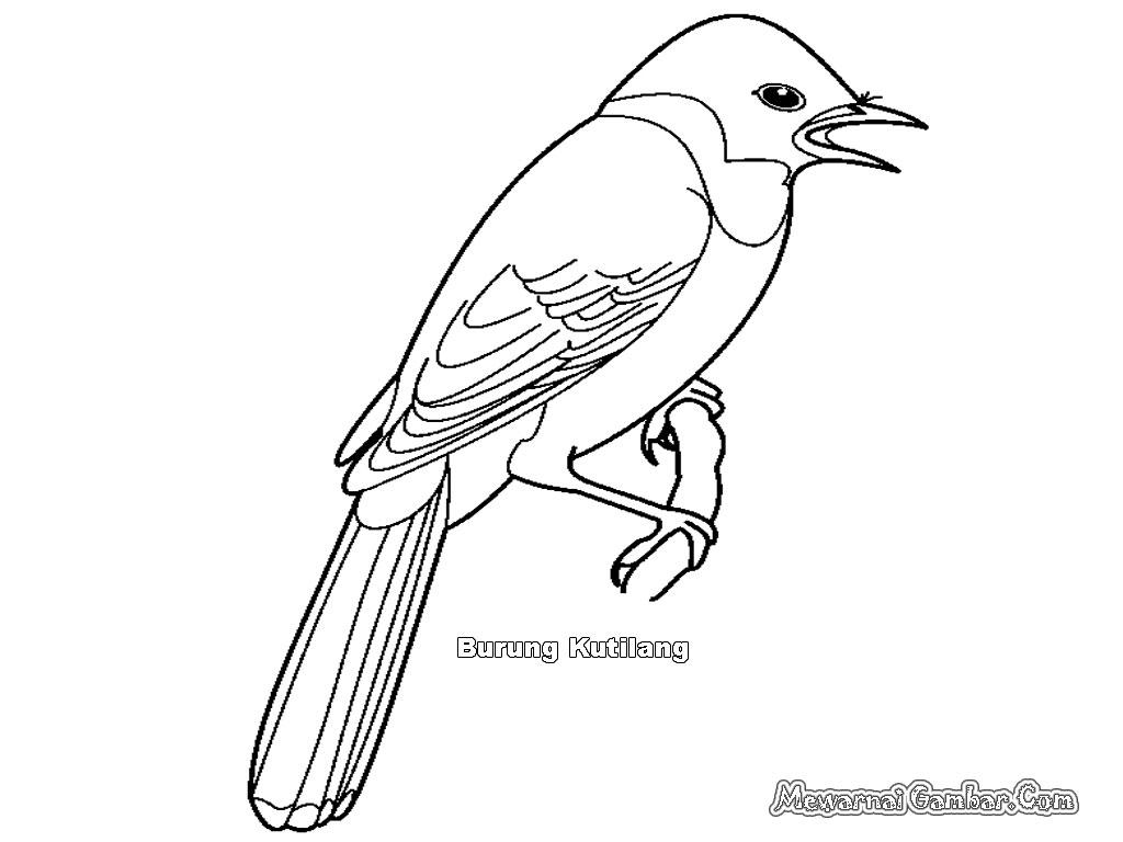 Belajar Mewarnai Burung Garuda  Warna Devia
