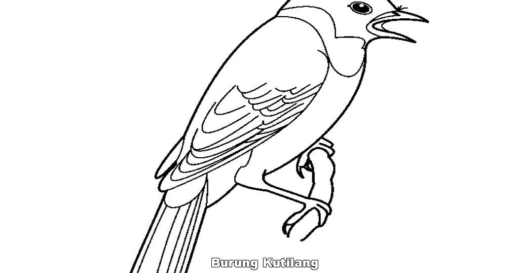 Mewarnai Gambar Burung Cendrawasih N Warna