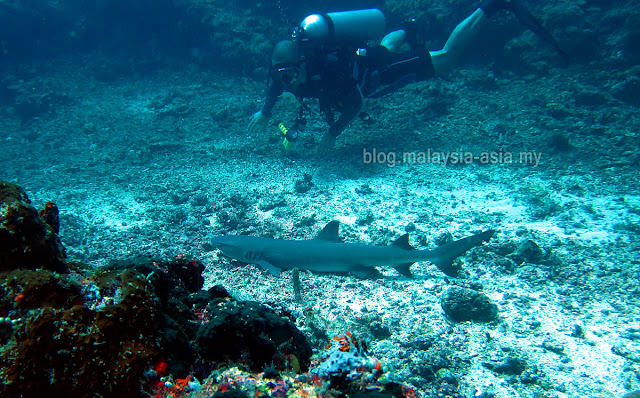 Dive Tourism in Malaysia 2016