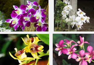 Arti MImpi Bunga Anggrek Pertanda Baik