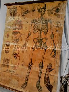 Antiguo cartel de escuela de anatomía en Desembalaje Irun
