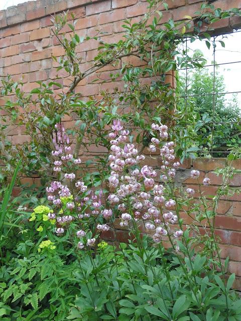 ceglany mur w ogrodzie