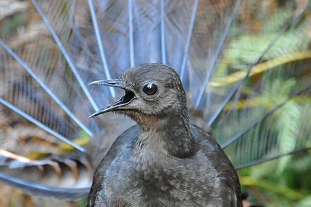 Τα μεγαλύτερα πουλιά