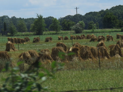 Amish hay stacks