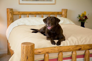 Bed Cover for Pets