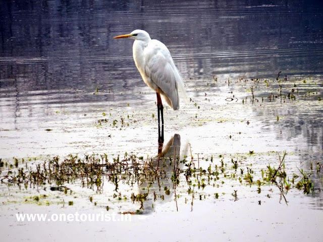 keoladeo  national park bharatpur birds image