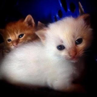 Gatitos. Diario de un Observador