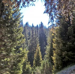 BOSCHI-DELLE-CESANE