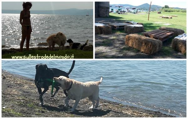 spiaggia per cani vicino roma riva di polline
