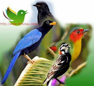 Dengarkan suara 10 jenis burung aneh-aneh mancanegara