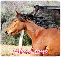 http://www.asovicaf.es/2014/01/apadrina-un-caballo.html