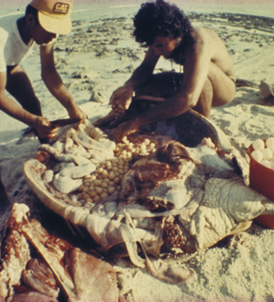 Pescadores mataram 11 tartarugas de uma só vez - Sorriso na Web