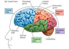 """Brain"""
