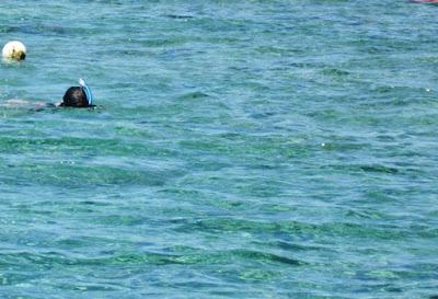 Snorkeling-Balicasag-sanctuary