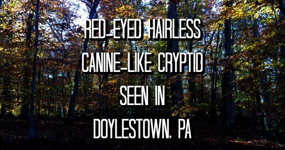 Red-Eyed Hairless Canine-Like Cryptid Seen in Doylestown, PA