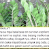 """""""Zamioculcas"""" Also Known As Welcome Plant Poisonous If Ingested"""