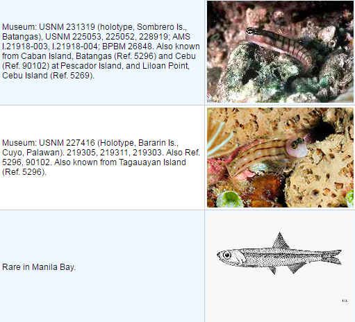 List of Endemic Fish in the Philippines