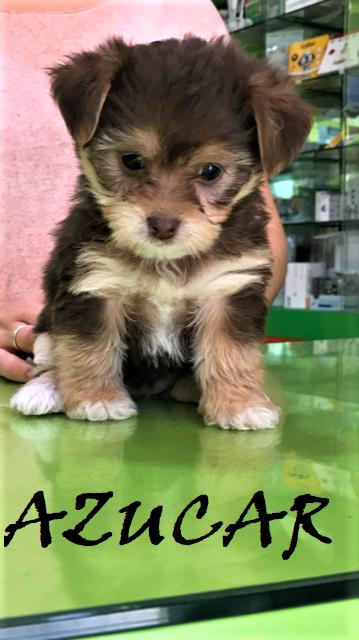 Adoptar Un Cachorro Cachorros En Adopción Poker Y Azucar