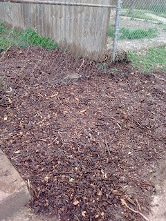 Grass Seed with Light Mulch Street View Scotts Contracting