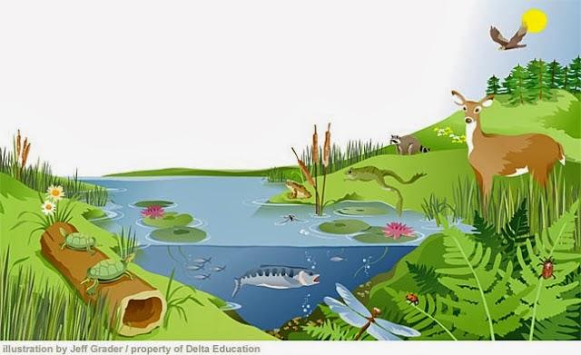 Michelle Bodhisattva Wawasan Ekosistem Dan Saling Ketergantungan