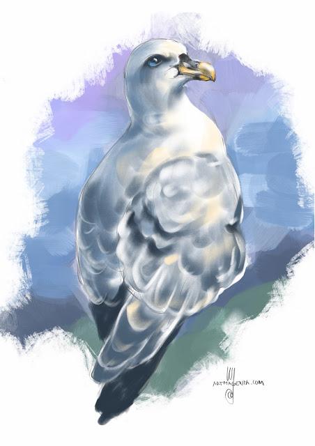 Fulmar bird painting by Artmagenta