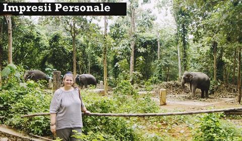 impresii-vizita-elefanti