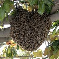 طرد النحل