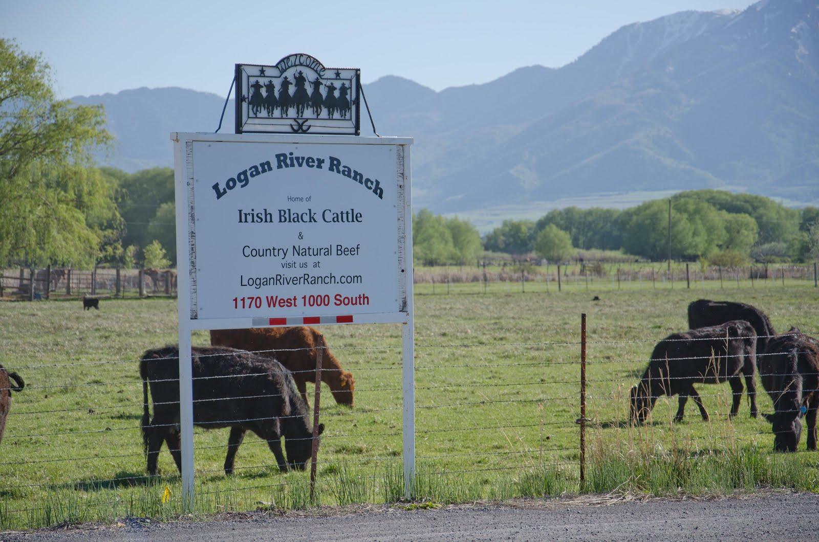 Logan River Ranch ~ Irish Blacks Country Natural Beef (CNB